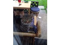 Cute male tabby is looking for a new home.