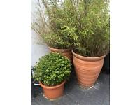 X 3 garden pots free collection