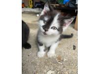 Little Kitten looking for sweet Home 😊