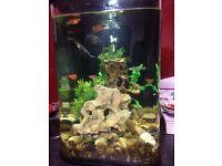 BiOrb fish tank ideal starter tank