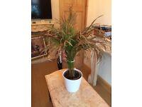 2 POTTED PALM PLANTS