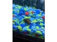 Aquarium snails for sale