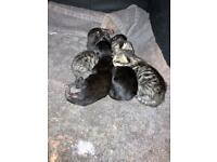 Kittens for sale ALL SOLD