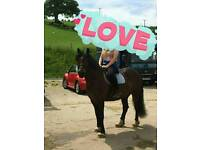 Pony for Part Loan