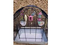 2 birds (Buggies) for sale