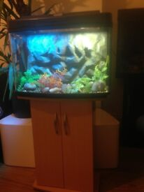 Aquarium/Fish Tank with matching cabinet and 3D background