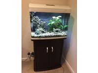 Tropical Fish Tank with Cabinet