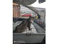 Found cat - microchip name of missy