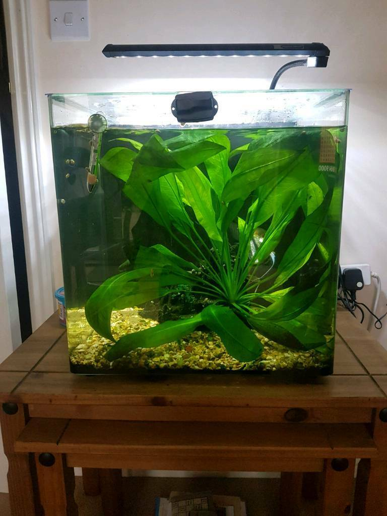Aqua one 55ltr tropical fish and tank