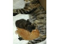 Beautiful kittens ready on 5 December 2020 - ALL RESERVED