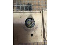 Tame Budgies For sale!