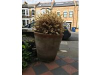 FREE Large Terracotta Garden Pots