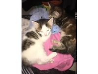 Cat and Kitten to give away for FREE