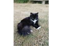 Found Cat - Hamilton (LE5)