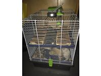 Gerbils for sale brought in June