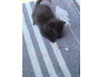 2 black kittens 1boy 1 girl