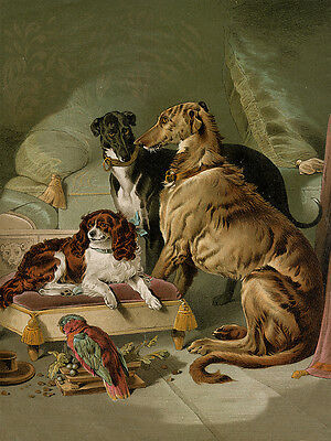 DEERHOUND GREYHOUND CAVALIER TOY SPANIEL CHARMING DOG GREETINGS NOTE CARD