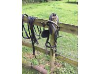Black pony Harness with driving bit