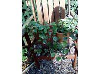 3 x garden plants in pots