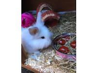 Baby female rabbit