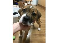 14 week puppy