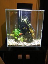 Amazing fluval edge fishtank , aguarium