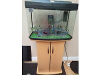 2 ft Fish tank & stand full tropical set up 64 litres