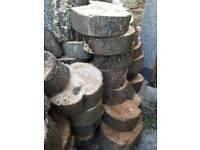 Ash logs for sale