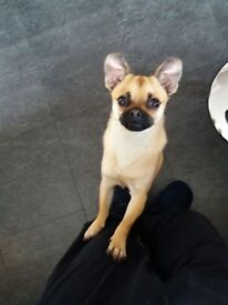 14 month old boy chug