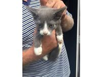 Very well looked after friendly kittens for sale