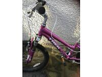 Trek pink bike (bought at criterium cycles 3 years ago)