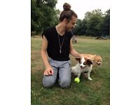 Animal Loving Dog Walker Available for Hampstead & Queen's Park