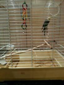 Cockatiel and cage