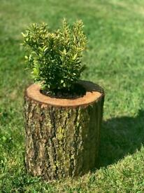 Handmade log plant pot