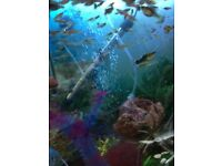 Endler guppy fish tropical fish for sale