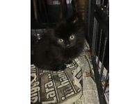 Kittens available now