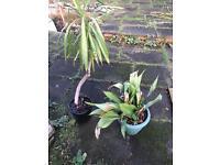 2 plants