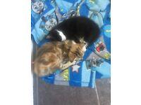 3 kittens ready for forever home