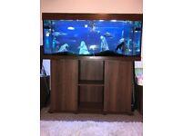 Juwel Rio 240 Fish tank/Aquarium