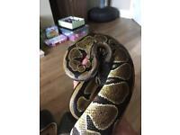 Vivarium and python