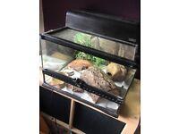 Leopard gecko set up