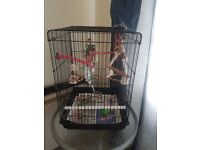 Budgie with food and cage
