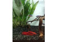 Nano fish tank with fish