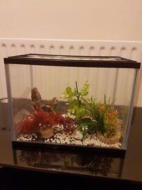 Aquarium 5,5 liters + decorations.