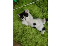 Cheap Beautiful Male & female Kittens for Sale