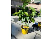 Big plant sale! indoor and outdoor plants
