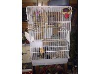 big bird cage plus food -toys - feather spry 47 cm x 47 cm x 67