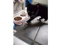5 month old girl kitten