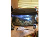 Fish tank & accessories & fish