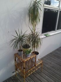 Bamboo and wicker 2 tier plant stand shelf Tiki bar on trend